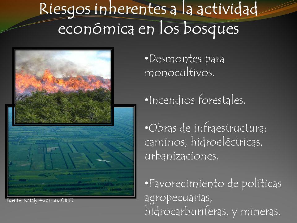 Riesgos inherentes a la actividad económica en los bosques