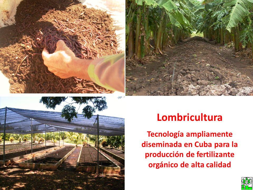 Lombricultura Tecnología ampliamente diseminada en Cuba para la producción de fertilizante orgánico de alta calidad.