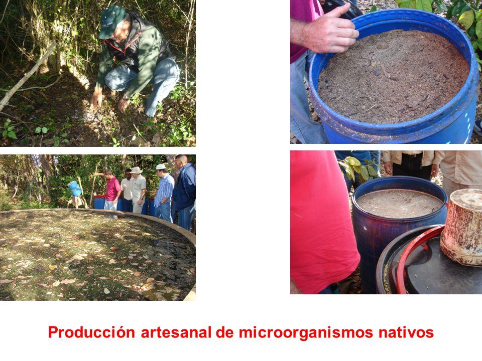 Producción artesanal de microorganismos nativos