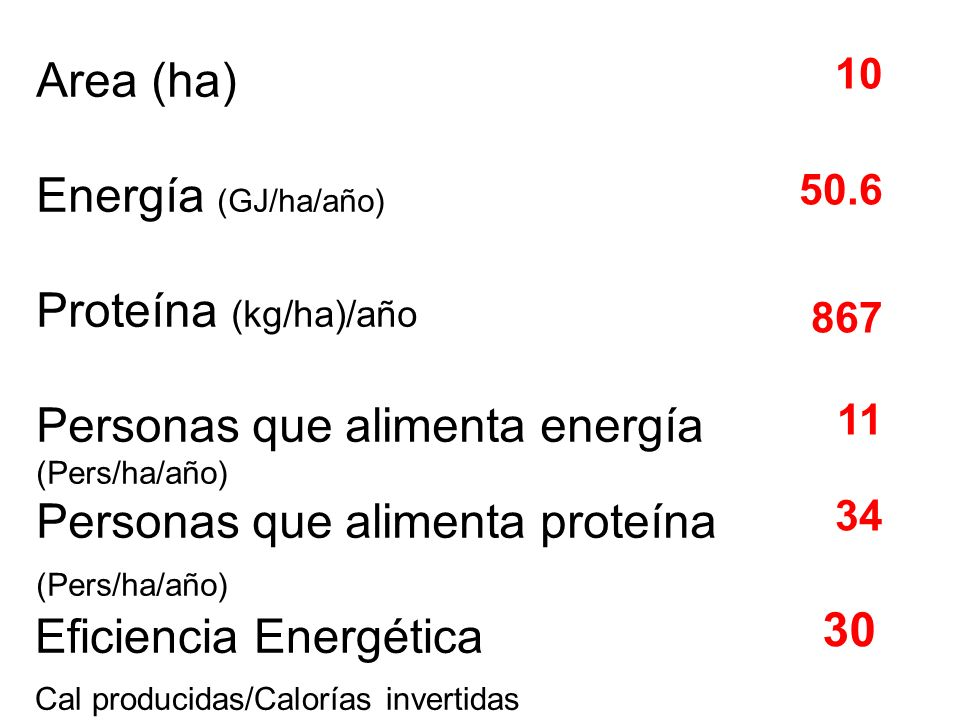 Personas que alimenta energía Personas que alimenta proteína