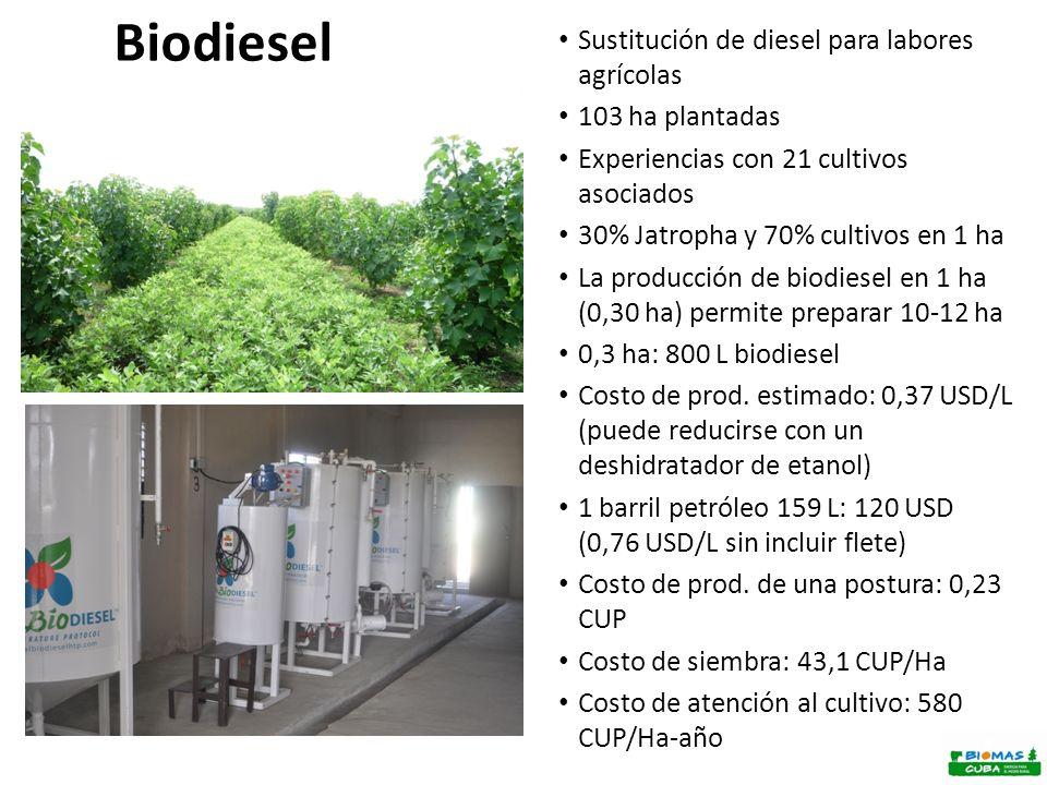 Biodiesel Sustitución de diesel para labores agrícolas