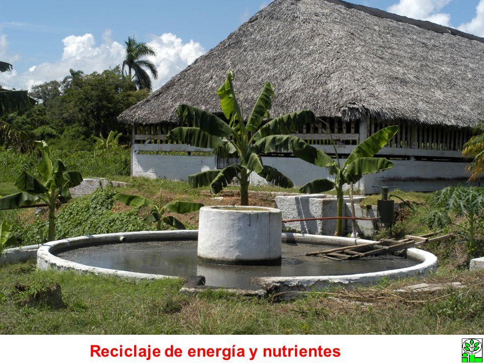 Reciclaje de energía y nutrientes
