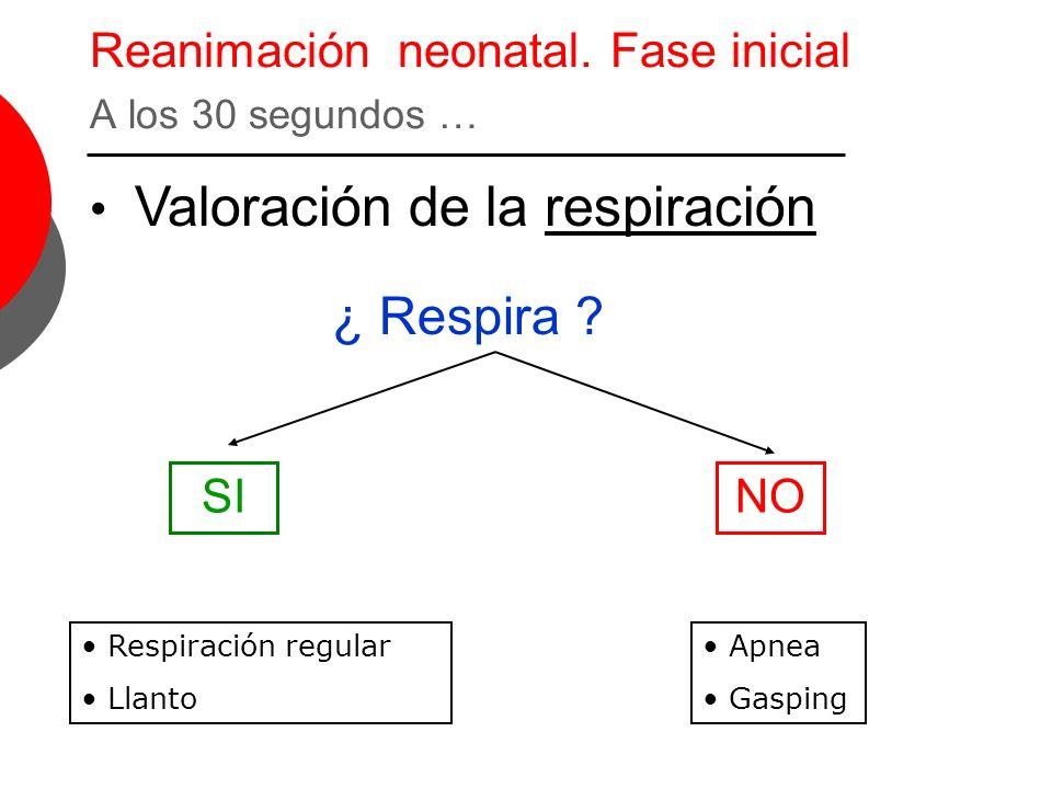 Reanimación neonatal. Fase inicial A los 30 segundos …