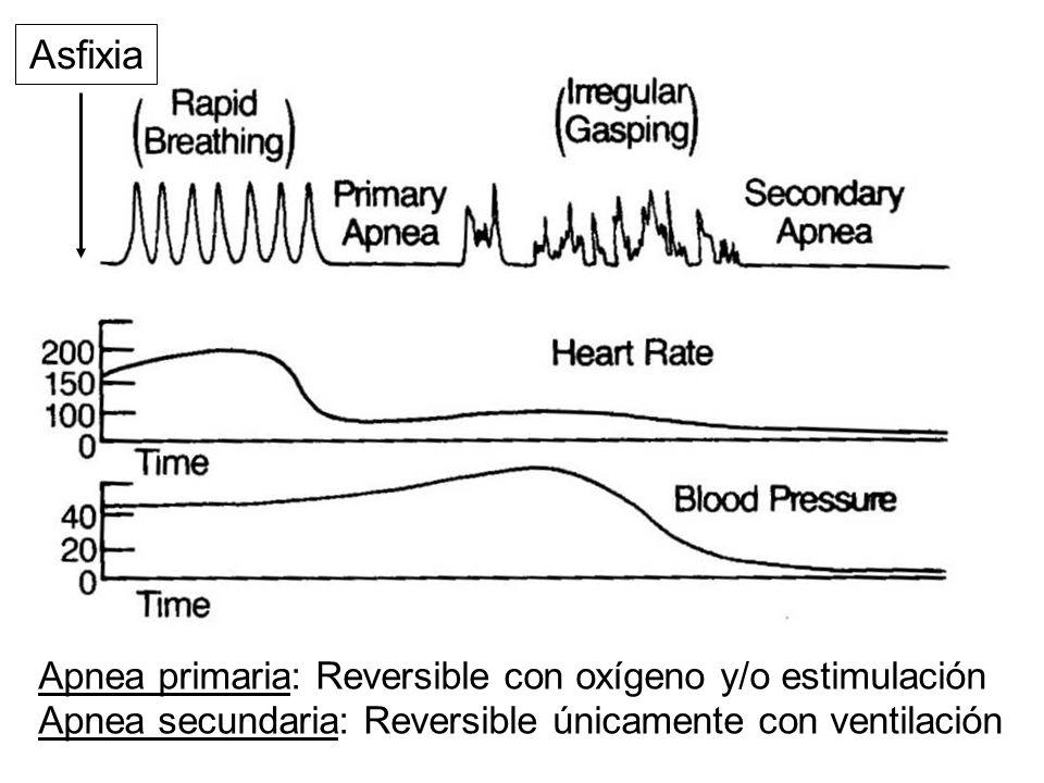 Asfixia Apnea primaria: Reversible con oxígeno y/o estimulación