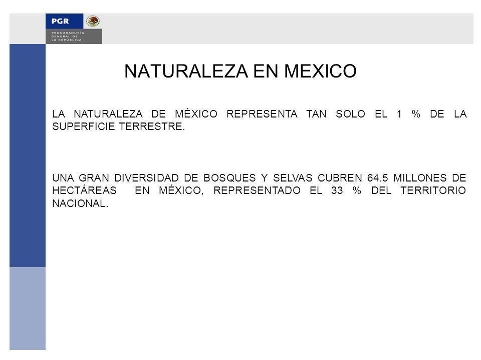 NATURALEZA EN MEXICO LA NATURALEZA DE MÉXICO REPRESENTA TAN SOLO EL 1 % DE LA SUPERFICIE TERRESTRE.