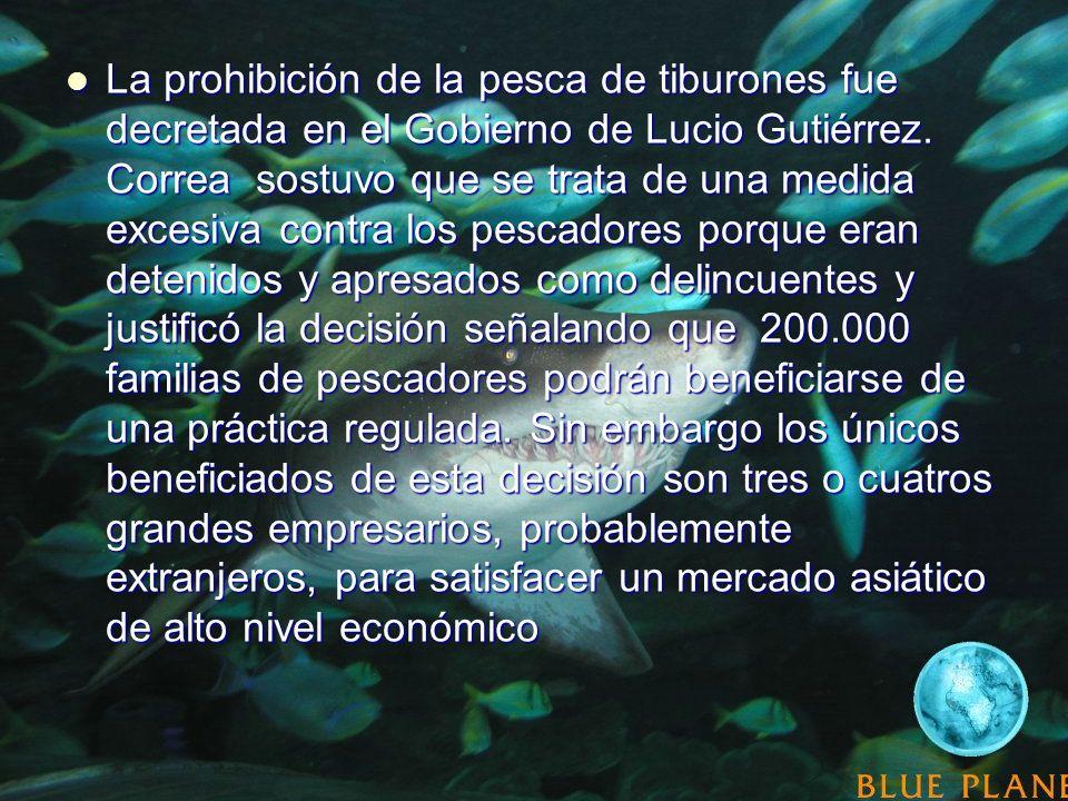La prohibición de la pesca de tiburones fue decretada en el Gobierno de Lucio Gutiérrez.