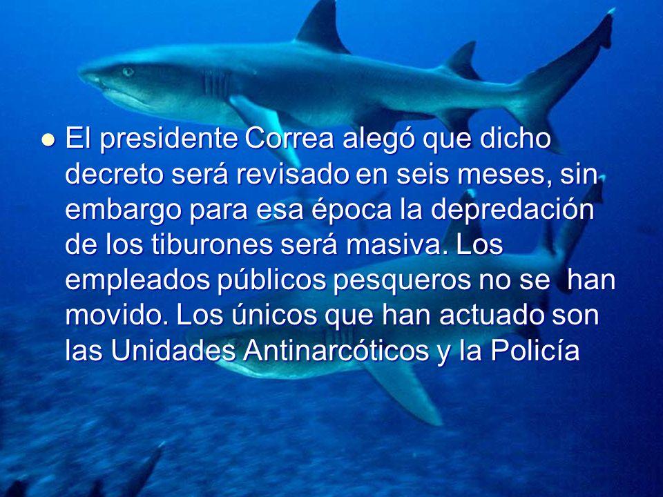 El presidente Correa alegó que dicho decreto será revisado en seis meses, sin embargo para esa época la depredación de los tiburones será masiva.