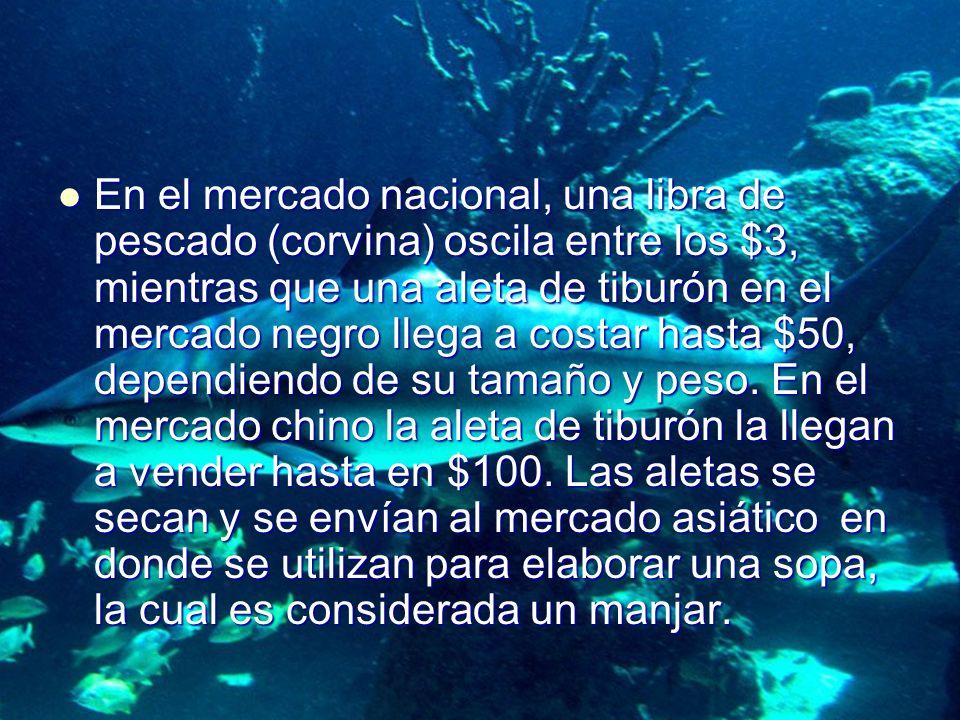 En el mercado nacional, una libra de pescado (corvina) oscila entre los $3, mientras que una aleta de tiburón en el mercado negro llega a costar hasta $50, dependiendo de su tamaño y peso.