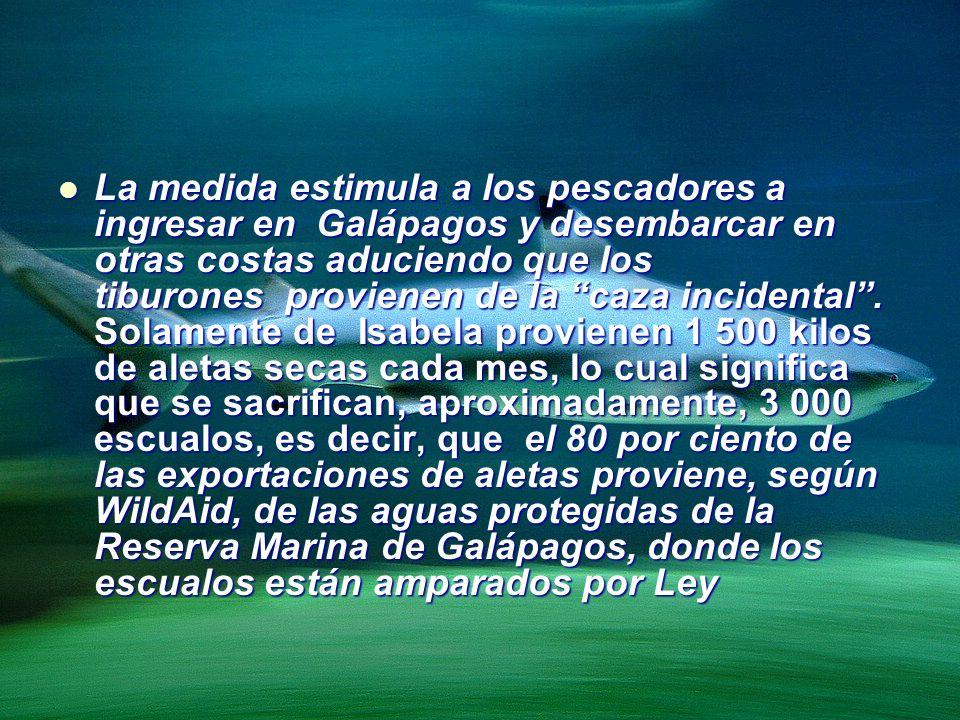 La medida estimula a los pescadores a ingresar en Galápagos y desembarcar en otras costas aduciendo que los tiburones provienen de la caza incidental .