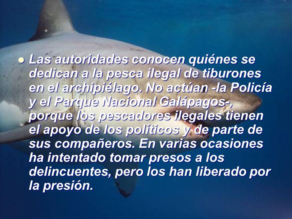 Las autoridades conocen quiénes se dedican a la pesca ilegal de tiburones en el archipiélago.