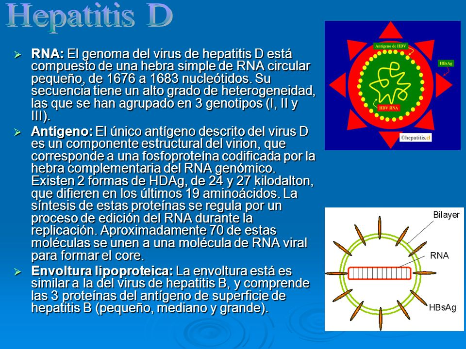 Hepatitis D