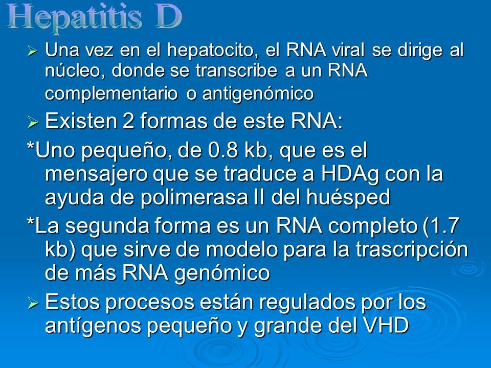 Hepatitis D Existen 2 formas de este RNA: