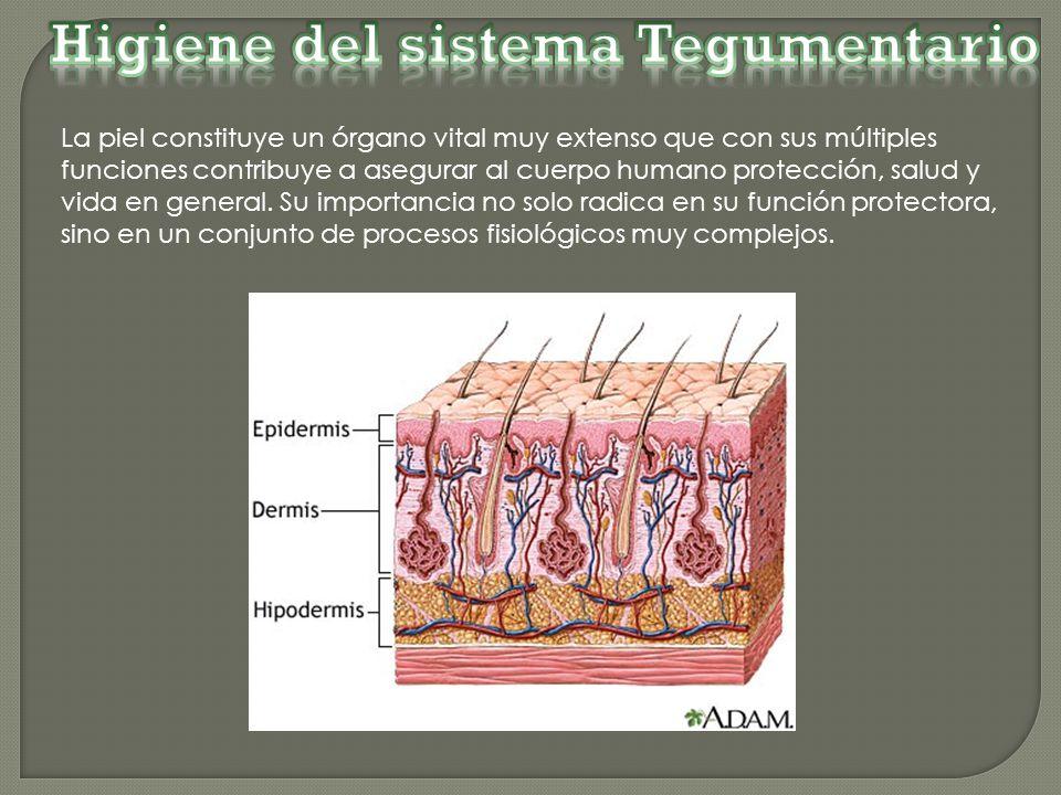 Asombroso Sistema De órganos Tegumentario Foto - Anatomía de Las ...