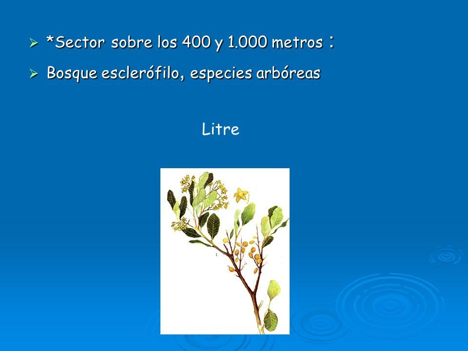 Litre *Sector sobre los 400 y 1.000 metros :