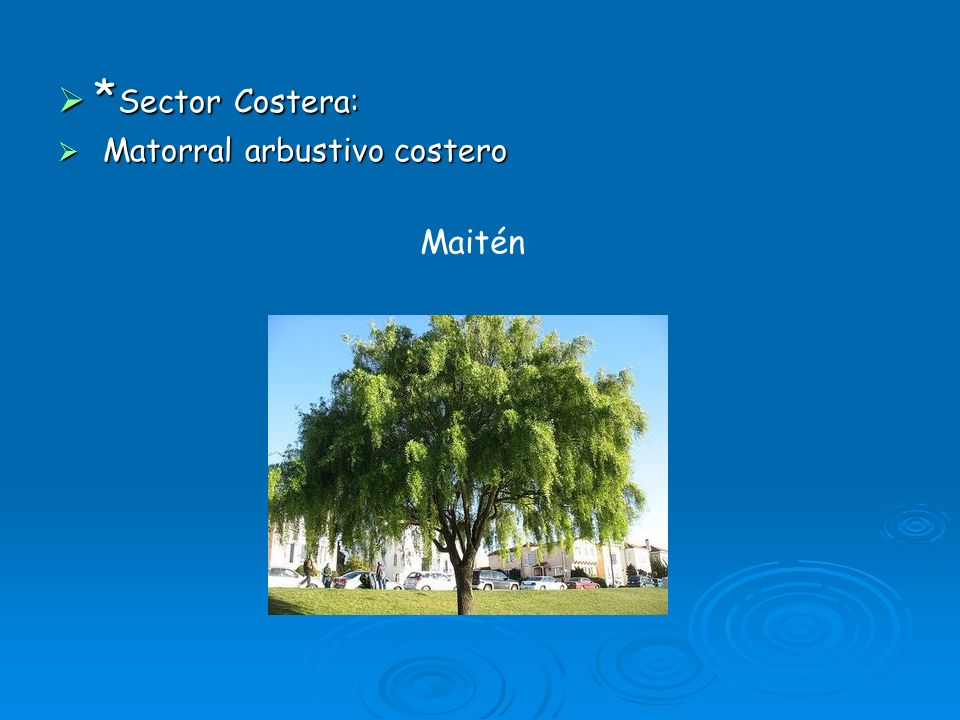 *Sector Costera: Matorral arbustivo costero Maitén