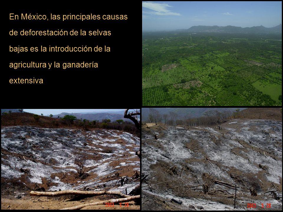En México, las principales causas de deforestación de la selvas bajas es la introducción de la agricultura y la ganadería extensiva