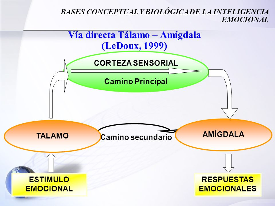 Vía directa Tálamo – Amígdala (LeDoux, 1999)