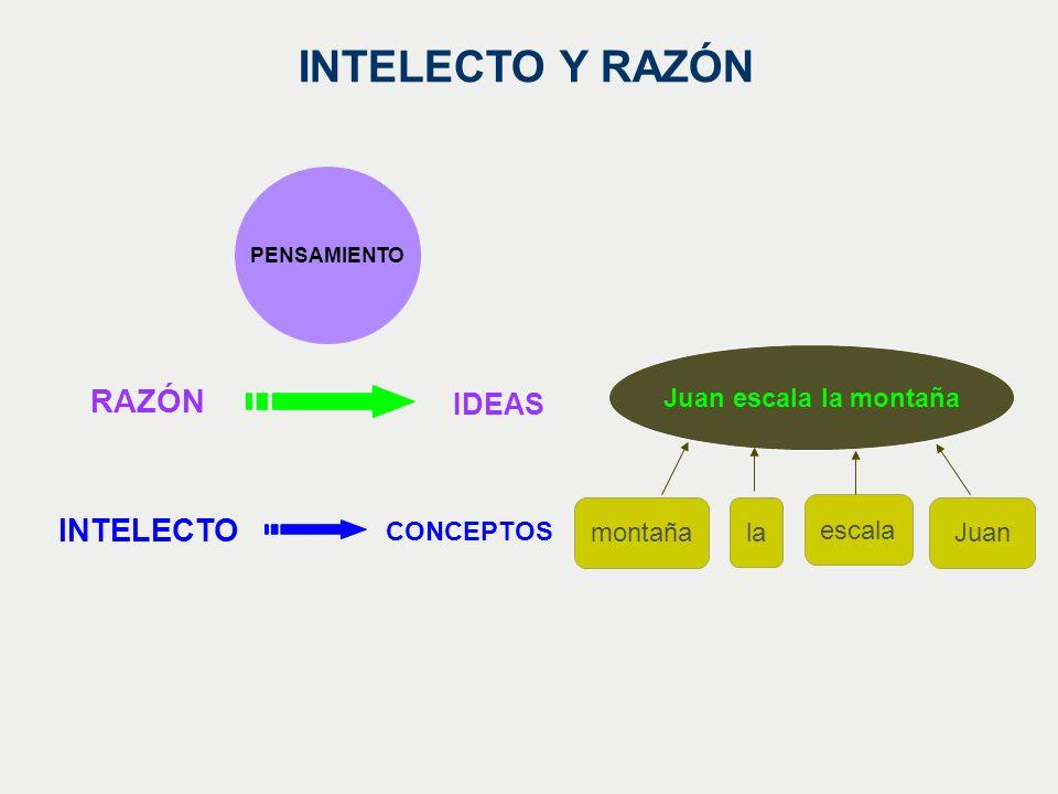 INTELECTO Y RAZÓN RAZÓN INTELECTO IDEAS Juan escala la montaña montaña