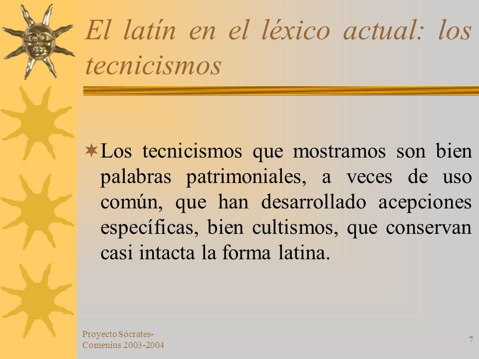 El latín en el léxico actual: los tecnicismos