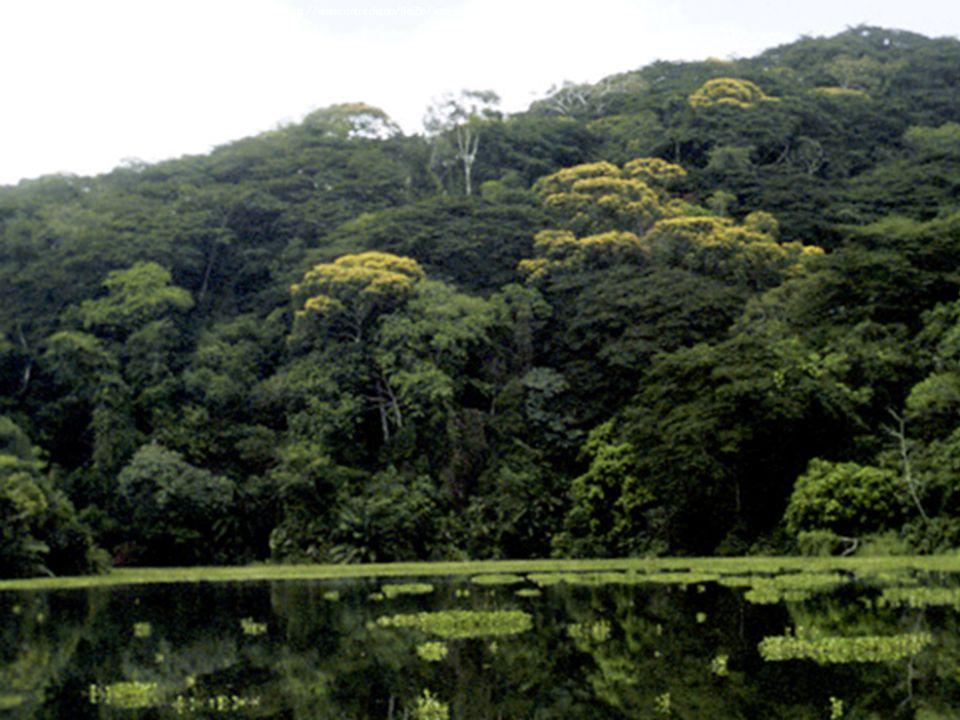 Image Courtesy of: http://www. anu. edu