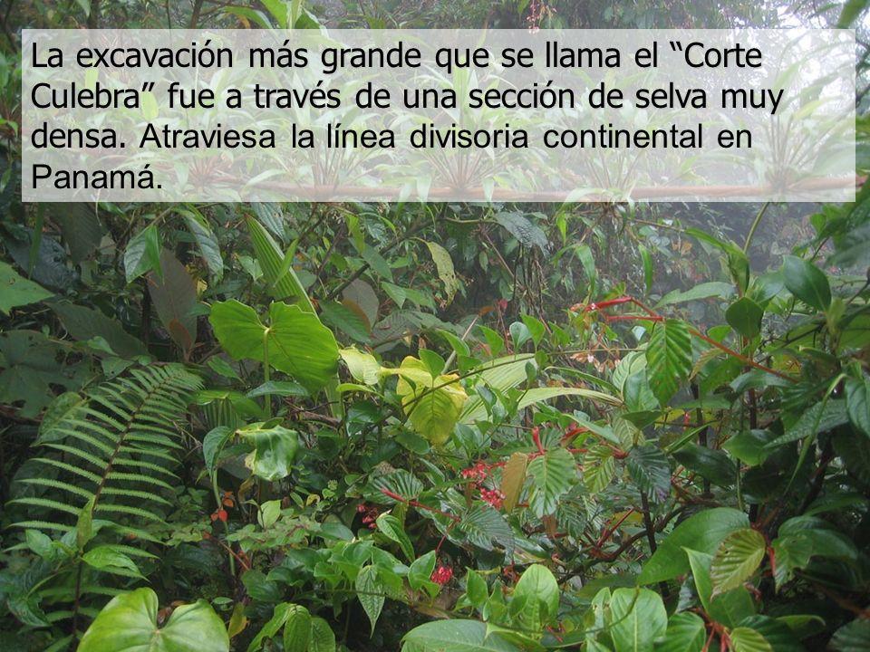 La excavación más grande que se llama el Corte Culebra fue a través de una sección de selva muy densa.