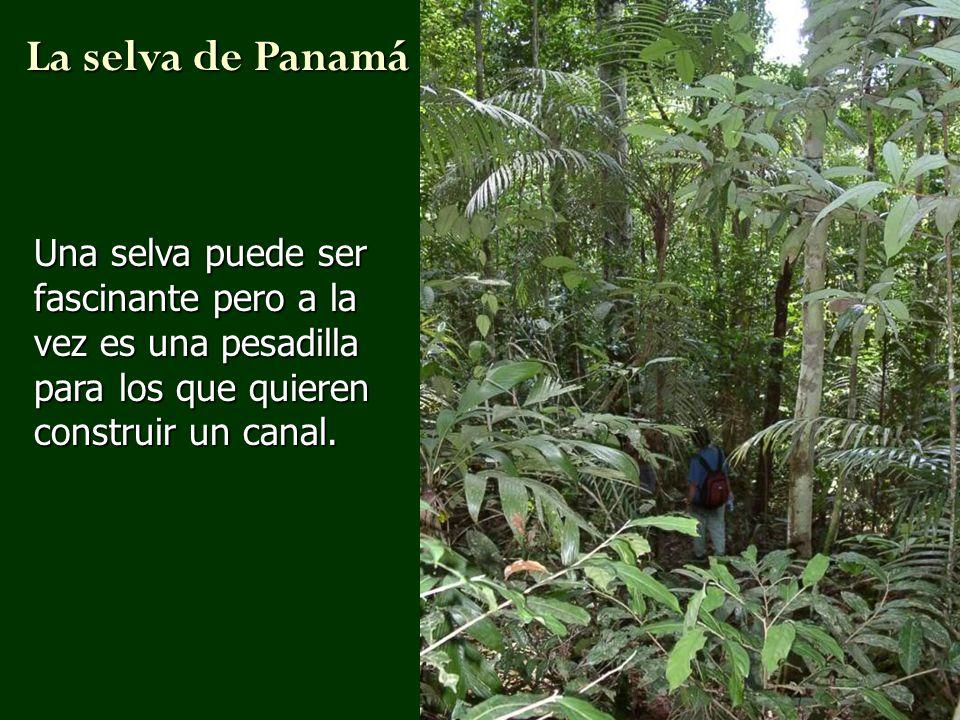 La selva de PanamáUna selva puede ser fascinante pero a la vez es una pesadilla para los que quieren construir un canal.