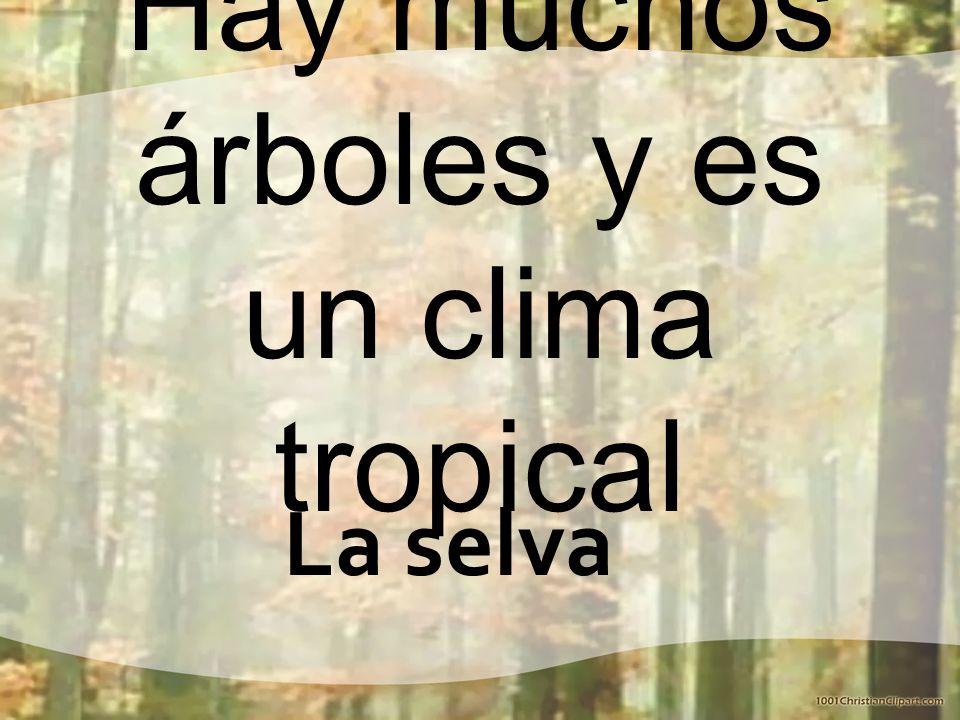 Hay muchos árboles y es un clima tropical