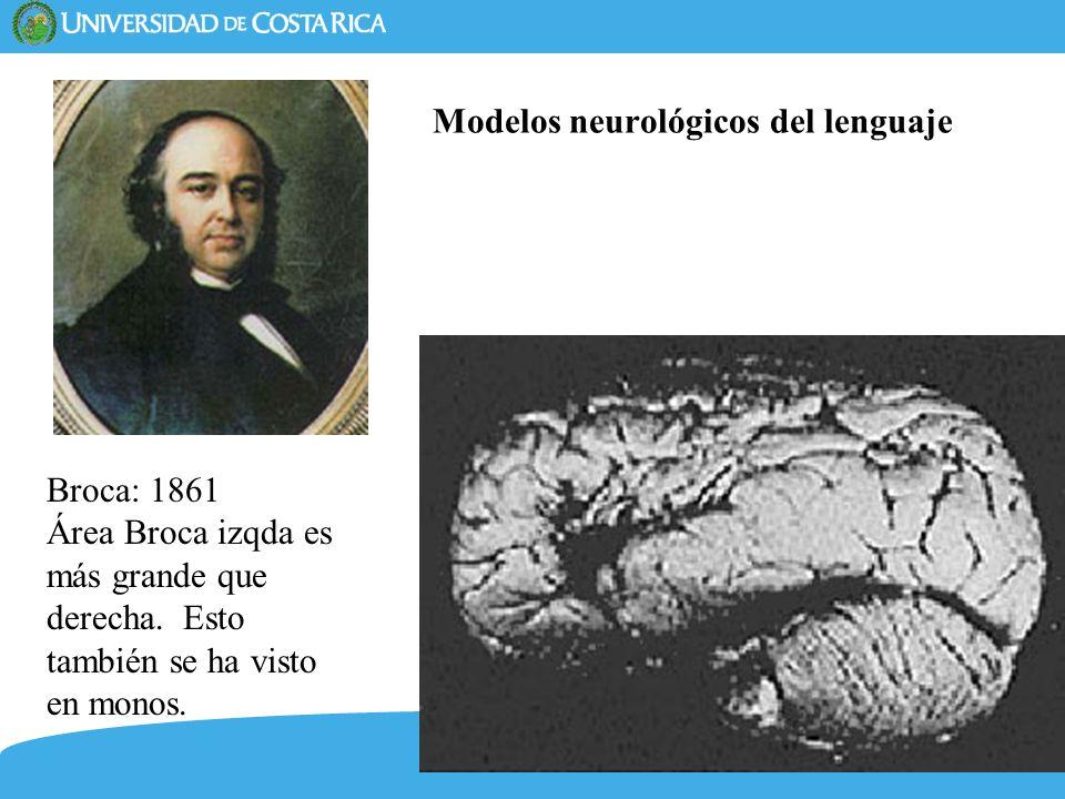 Modelos neurológicos del lenguaje
