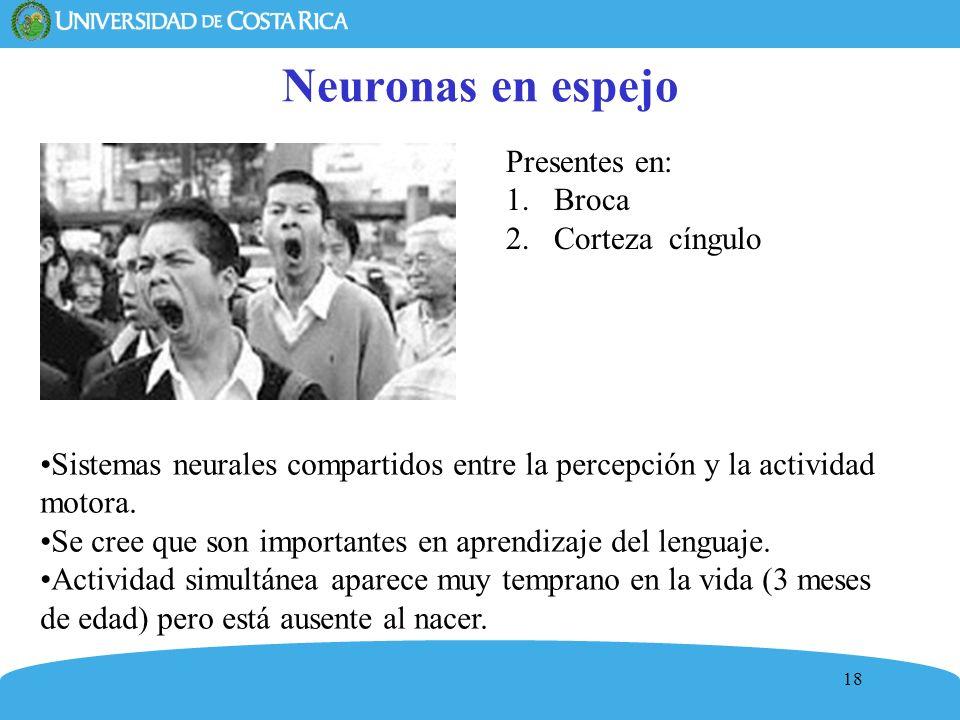 Neuronas en espejo Presentes en: Broca Corteza cíngulo