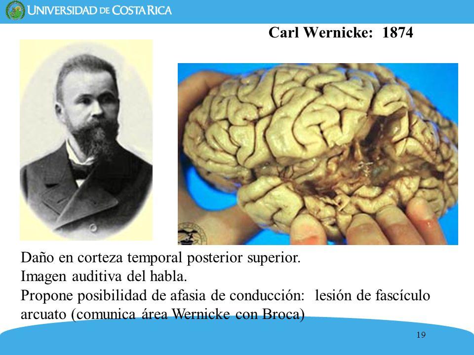 Carl Wernicke: 1874 Daño en corteza temporal posterior superior. Imagen auditiva del habla.