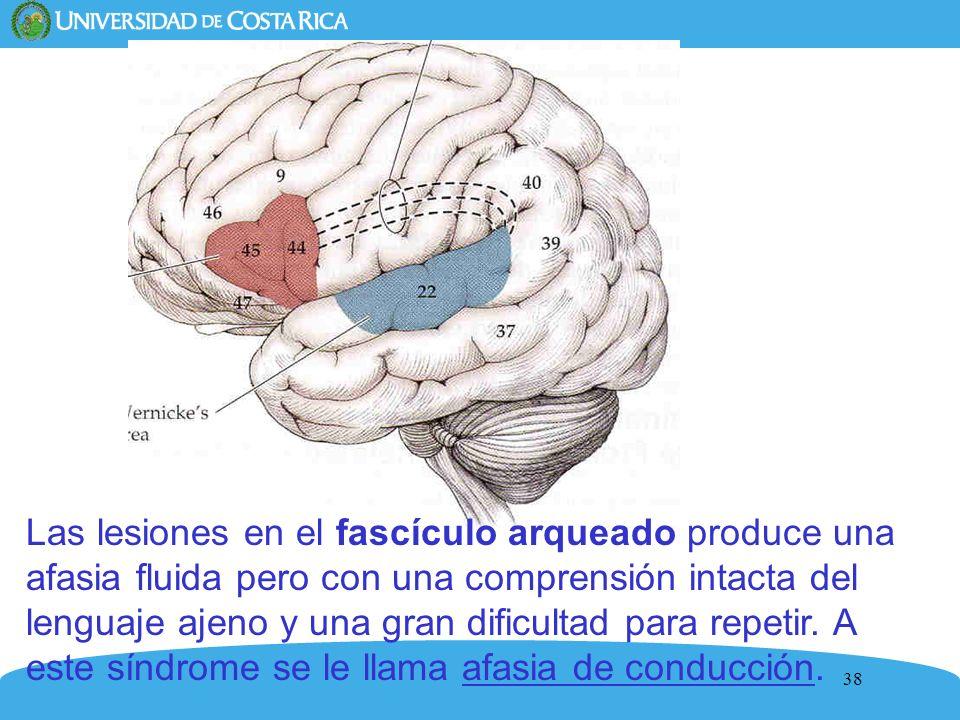 Las lesiones en el fascículo arqueado produce una afasia fluida pero con una comprensión intacta del lenguaje ajeno y una gran dificultad para repetir.