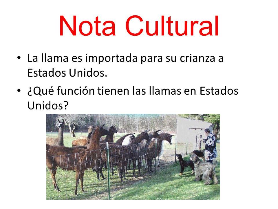 Nota Cultural La llama es importada para su crianza a Estados Unidos.