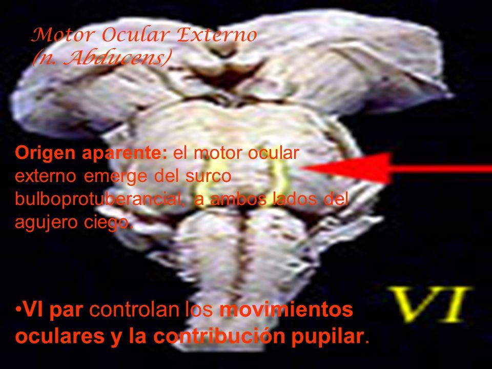 VI par controlan los movimientos oculares y la contribución pupilar.
