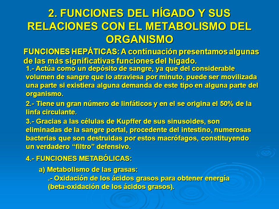 2. FUNCIONES DEL HÍGADO Y SUS RELACIONES CON EL METABOLISMO DEL ORGANISMO
