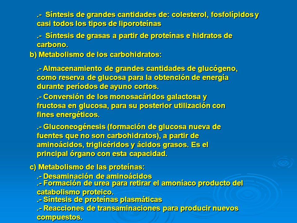 .- Síntesis de grandes cantidades de: colesterol, fosfolípidos y casi todos los tipos de liporoteínas