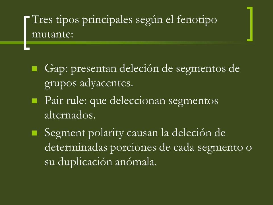 Tres tipos principales según el fenotipo mutante: