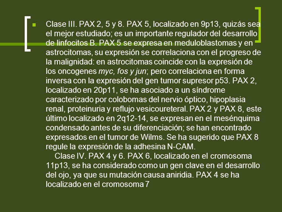 Clase III. PAX 2, 5 y 8.