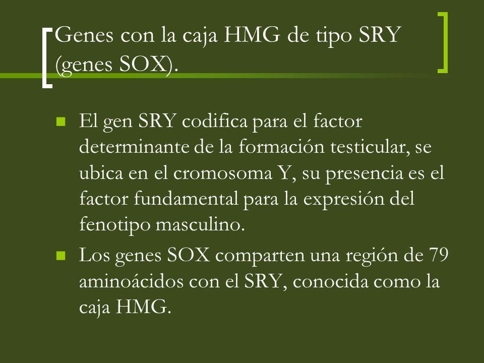 Genes con la caja HMG de tipo SRY (genes SOX).