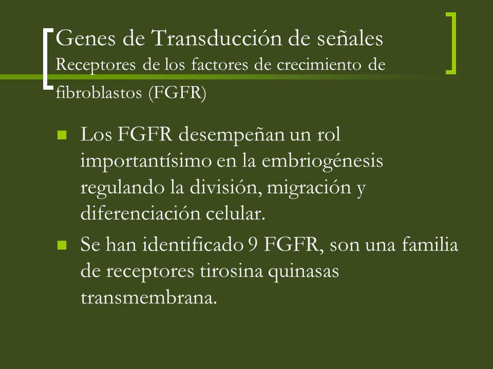 Genes de Transducción de señales Receptores de los factores de crecimiento de fibroblastos (FGFR)