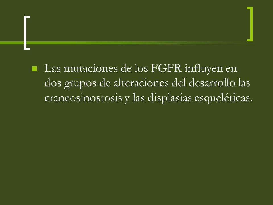 Las mutaciones de los FGFR influyen en dos grupos de alteraciones del desarrollo las craneosinostosis y las displasias esqueléticas.