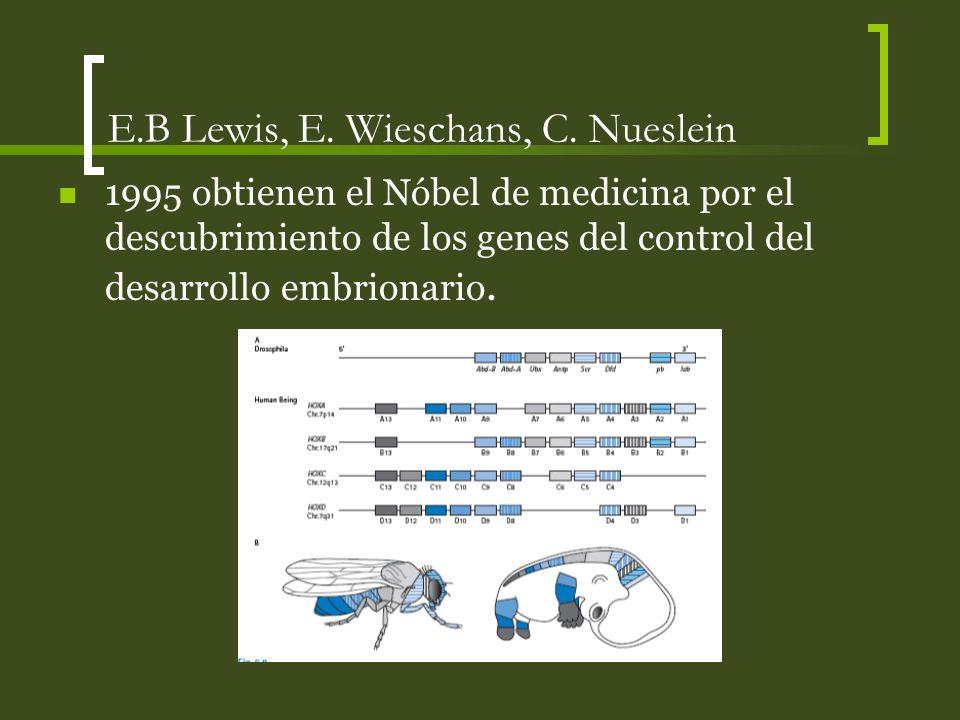 E.B Lewis, E. Wieschans, C. Nueslein