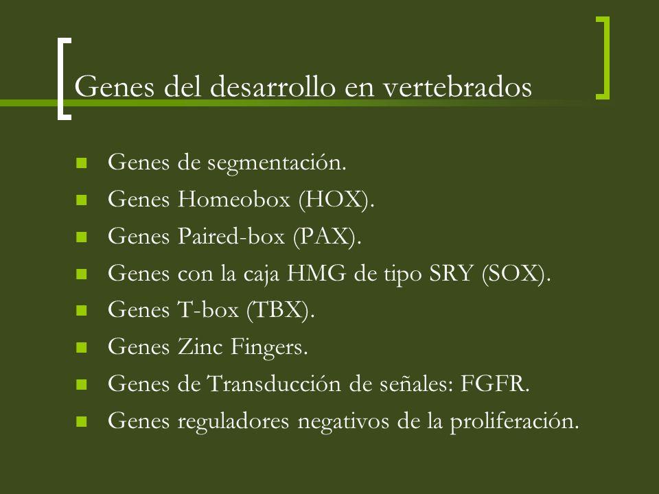 Genes del desarrollo en vertebrados