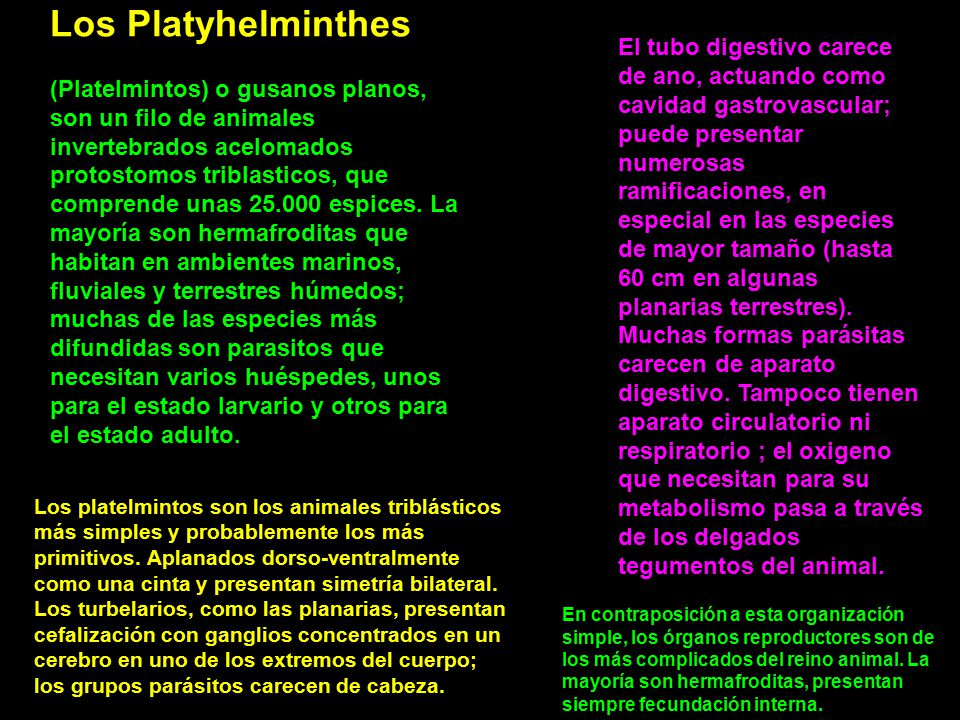 Los Platyhelminthes
