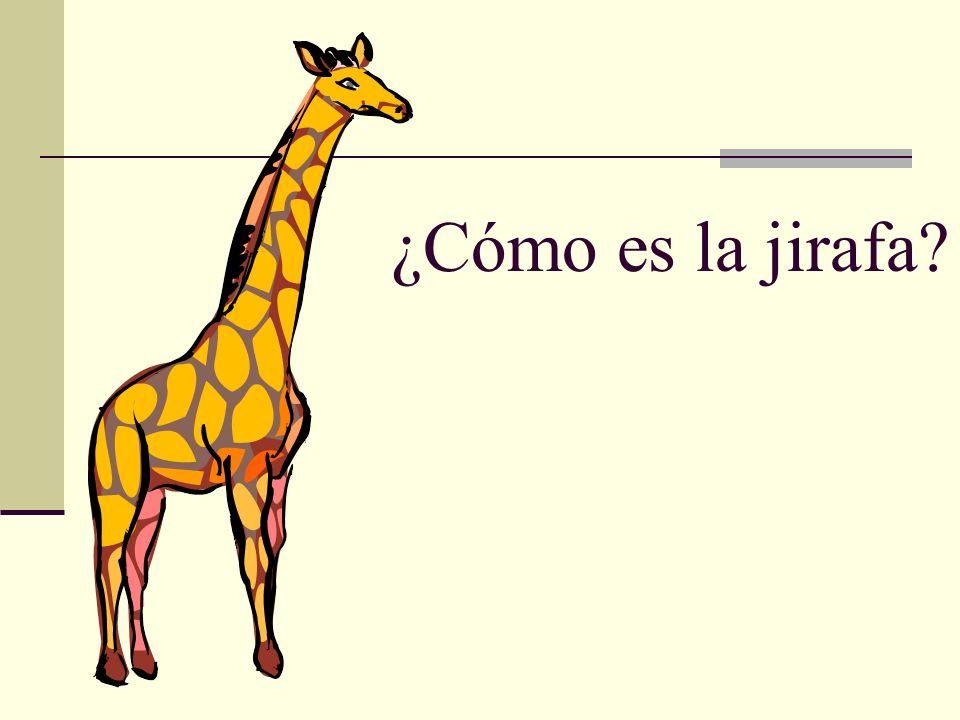 ¿Cómo es la jirafa