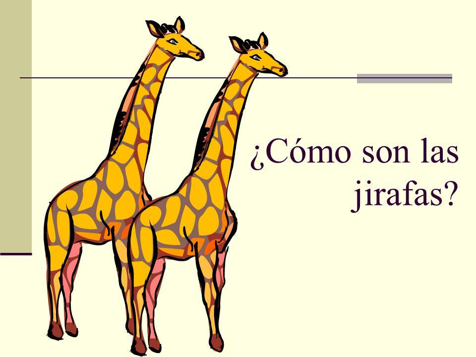¿Cómo son las jirafas