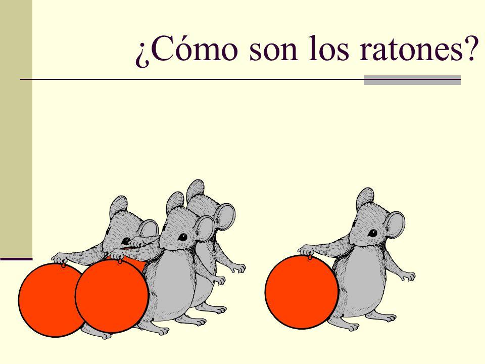 ¿Cómo son los ratones