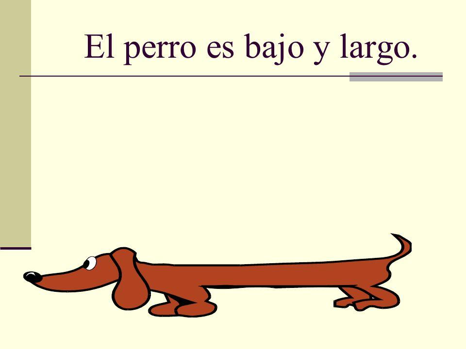 El perro es bajo y largo.