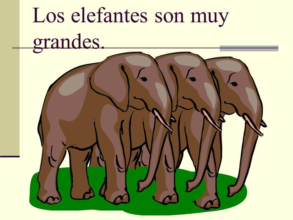 Los elefantes son muy grandes.