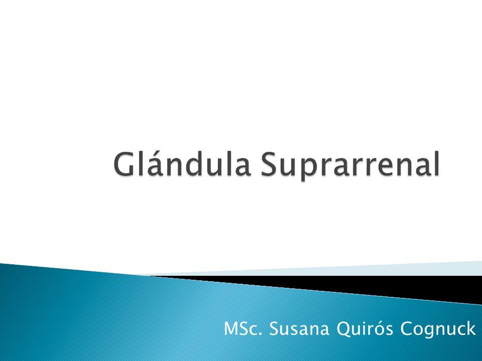 MSc. Susana Quirós Cognuck