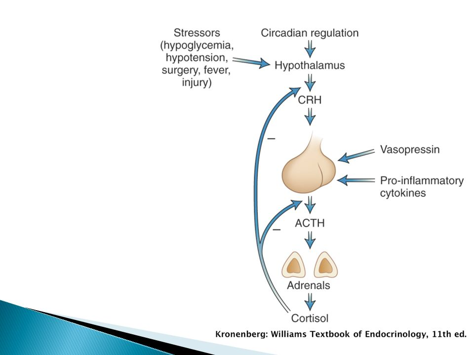 CRH is present in sevaral tissues, including the pancreas, testes and CNS.
